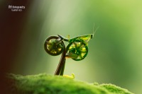 photo mante religieuse à vélo