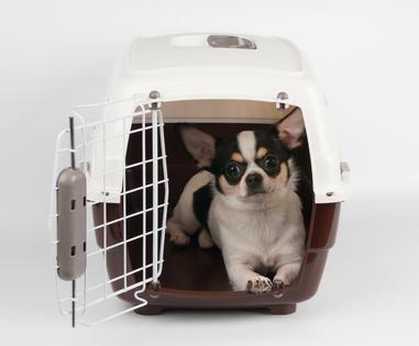 Comment Aider Mon Chien Lorsquil Fait Chaud Zeilaina - Carrelage salle de bain et tapis rafraichissant chien