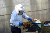 équipement apiculture